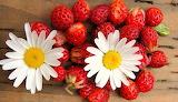 Strawberries-and-Daisies