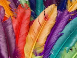 Colourful-feathers-wallpaper-for-1024x768-2-610