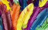 Colorful feathers-wallpaper-1440x900