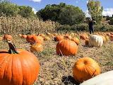 Santa Fe Harvest