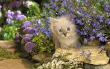 ☺♥ Spring day in the garden...