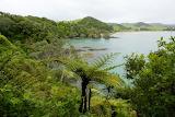 The Beautiful Tutukawa Coast NZ