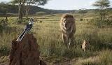Zazu, Mufasa & Simba
