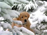 Cache cache dans la neige