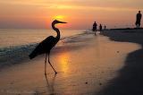 Heron at Sanibel Is. , Florida