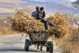 Romania, wooden wagon laden with straw