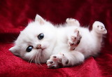 ☺♥ Little kitty...