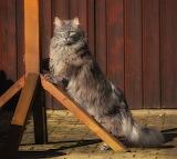 Cats Glance Grey Fluffy 577635 1148x1024