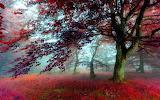 Red-Autumn-Scenery