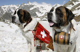 Swiss rescue dogs