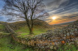 Tree By Hadrian's Wall, England