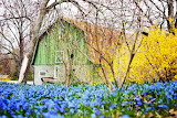 Barn with flower garden in spring