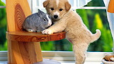 Bunny rabbit cute puppy
