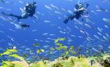 Coral Reef, Palau