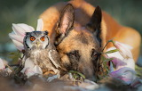 Photos Of Ingo The Dog And His Owl Friend
