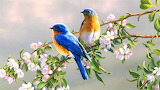 #Beautiful Birds on a Blossoming Branch