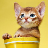 ☺ Cute kitty...
