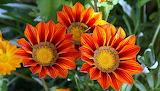 FlorsFlowers