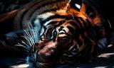 Animal-zoo-tiger
