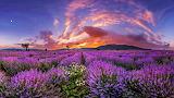 Lavender fields, mountains, sky, clouds, nature, landscape, colo