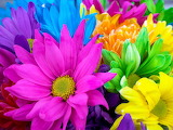 COLORFUL FLOWERS2
