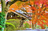 Autumn leaves of the temple