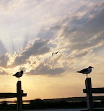 Sunset with perching gulls