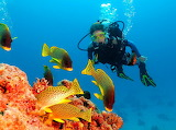 diver underwater near corals and fish