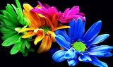 #Bright Flowers