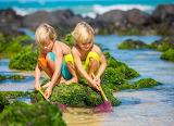 Children, boy, girl, net, sea, summer