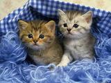 Two-cute-kittens