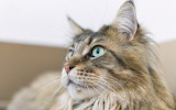 Cat collektion1w (91)