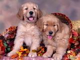 Dog-animals