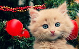 Cat-pussy-christmas-meow-15000-2560x1600