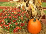 Красивый урожай