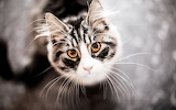 Looking-up-cat-animal-bokeh