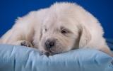 ☺♥ Sweet dreams...