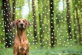 beautiful dog basking in the glow of fireflies