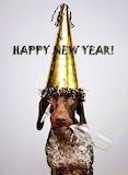 Happy New Year Doggie
