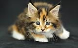Cute-cats-gif-wallpaper-3