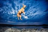 dogbreathphoto great jump!