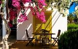 Terrace in flowers