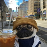 pug with drink