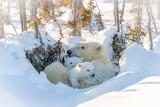 Eisbären Kuscheln sich aneinander