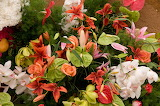 Orchid Lilies Anthurium 543759 1280x850