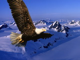 Flying Eagle...