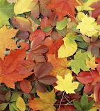 Puzzle liście