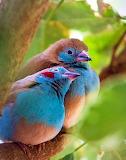 SnugglyBirds