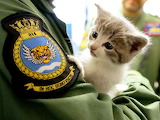 Lnt Nick Grimmer 814 Naval Air Squadron rescue a Kitten.