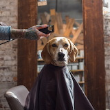Maddie the Coonhound getting her haircut